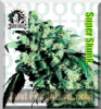 Sensi Super Skunk Female 5 Marijuana Seeds